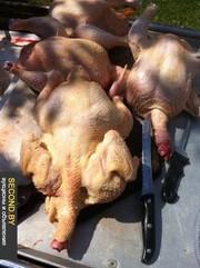 домашнее мясо птицы.индейка перепел куры